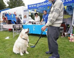 Guide dogs stall